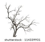 Dead Tree Isolated On White...