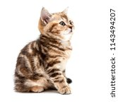 kitten isolated on a white... | Shutterstock . vector #1143494207
