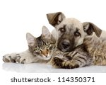 Stock photo the dog and cat lie together isolated on white background 114350371
