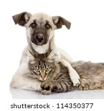 Stock photo the dog hugs a cat isolated on white background 114350377