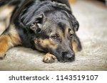 an elderly sad dog alone waits | Shutterstock . vector #1143519107