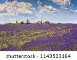 the flowering of lavender in...   Shutterstock . vector #1143523184