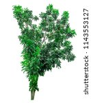 tree on white background with... | Shutterstock . vector #1143553127