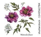 flowers set of watercolor... | Shutterstock . vector #1143562784