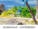 bright summers day on the coral ... | Shutterstock . vector #1143568364