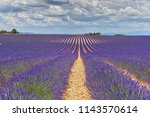 the flowering of lavender in...   Shutterstock . vector #1143570614