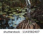 true tilt shift view of a rushy ... | Shutterstock . vector #1143582407