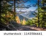 sunny forest in tatra mountains ... | Shutterstock . vector #1143586661