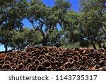 portugal  alentejo region. cork ... | Shutterstock . vector #1143735317