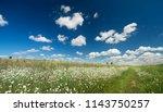 a path through a summer field... | Shutterstock . vector #1143750257