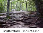 hiking trail roots | Shutterstock . vector #1143751514