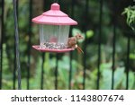 young northern cardinal... | Shutterstock . vector #1143807674