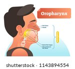 oropharynx vector illustration. ... | Shutterstock .eps vector #1143894554