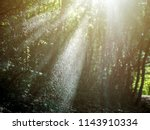 summer sunny day in the forest  ... | Shutterstock . vector #1143910334