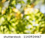 abstract nature background | Shutterstock . vector #1143924467