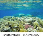 coral reef with stony coral in... | Shutterstock . vector #1143980027