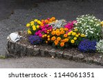 A Full Flower Bed  Containing...