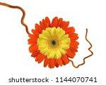 gerbera  flower with branch | Shutterstock . vector #1144070741