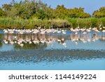Group Of Flamingos ...