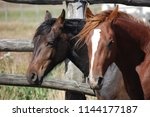 wild and domestic horses | Shutterstock . vector #1144177187