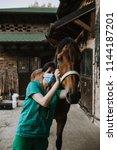 woman veterinary checking horse ...   Shutterstock . vector #1144187201