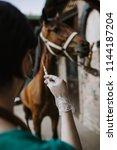 woman veterinarian gives an...   Shutterstock . vector #1144187204