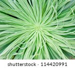 Green leaves close-up natural background - stock photo