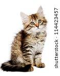 Stock photo siberian kitten isolated on the white background 114423457