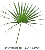 Green Palm Tree Isolated On...