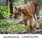 portrait of standing adult... | Shutterstock . vector #1144351391