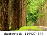country road surrounded by... | Shutterstock . vector #1144374944