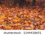 Autumn Fallen Leaves On The...