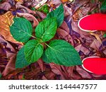 nature hd wallpapers | Shutterstock . vector #1144447577