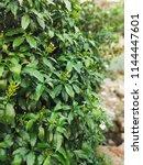nature hd wallpapers | Shutterstock . vector #1144447601