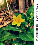 nature hd wallpapers | Shutterstock . vector #1144447631