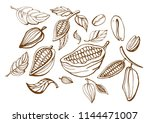 hand drawn vector isolated set... | Shutterstock .eps vector #1144471007