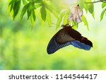 amazing moment about butterfly... | Shutterstock . vector #1144544417