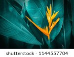 orange tropical exotic flowers... | Shutterstock . vector #1144557704