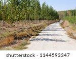 road between poplar in fuente... | Shutterstock . vector #1144593347