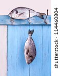 Small photo of Fresh sea bream is hanging headlong on a hook on a blue wooden board, fresh fished, catch the fish