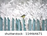 Tit Sitting On A Fence In Winter