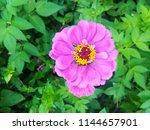 beautiful pink flower. | Shutterstock . vector #1144657901