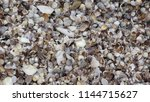 seashell background  lots of... | Shutterstock . vector #1144715627