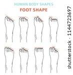 human body shapes.feet types... | Shutterstock .eps vector #1144723697