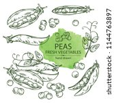 collection of peas . vector... | Shutterstock .eps vector #1144763897