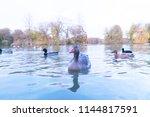 Wild Goose On Lake In Autumn...