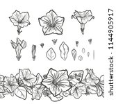vector set of outline petunia... | Shutterstock .eps vector #1144905917