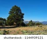 stately juniper tree on onyx... | Shutterstock . vector #1144939121