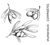 olive sketch element collection.... | Shutterstock .eps vector #1144968701