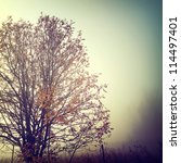 vintage nature background | Shutterstock . vector #114497401